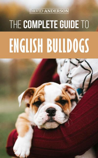The Complete Guide to English Bulldogs