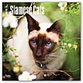 Siamese Cats - Siam-Katzen 2018 - 18-Monatskalender