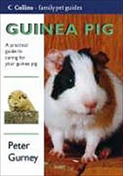 guinea-pig-collins-famliy-pet-guide-