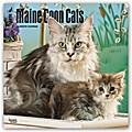 Maine Coon Cats - Hundekatzen 2018 - 18-Monatskalender