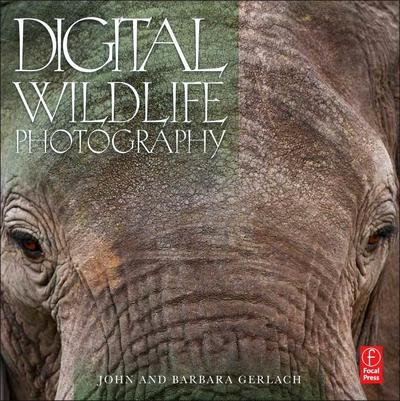 digital-wildlife-photography