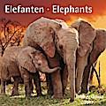 Elefanten / Elephants 2017