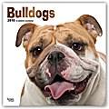Bulldogs - Bulldoggen 2018 - 18-Monatskalender