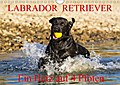 9783665915933 - N N: Labrador Retriever - ein Herz auf 4 Pfoten (Wandkalender 2018 DIN A4 quer) - Eine der beliebtesten Hunderassen in Porträt und Action auf 13 hinreißenden Kalenderblättern (Monatskalender, 14 Seiten ) - کتاب