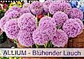 Allium Blühender Lauch (Wandkalender 2019 DIN A4 quer)