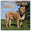 American Pit Bull Terriers  2018 - 18-Monatskalender