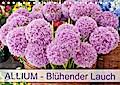Allium Blühender Lauch (Tischkalender 2019 DIN A5 quer)