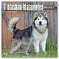 Alaskan Malamutes 2018 - 18-Monatskalender
