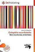 CALOPTILIA ACERIFOLIELLA