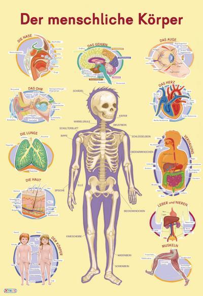 Mein Lernposter: Der menschliche Körper - Xenos - Poster, Deutsch, Marc Robitzky, ,