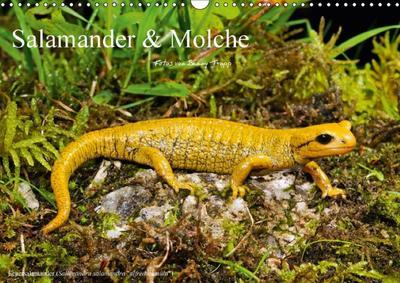 Salamander und Molche (Wandkalender 2018 DIN A3 quer)