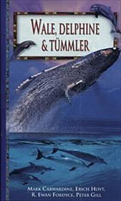 wale-delphine-tummler