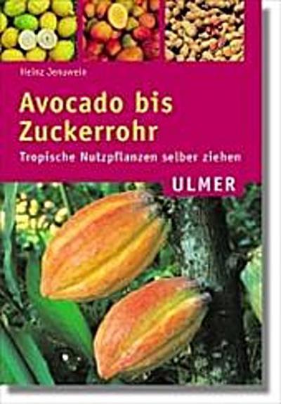 avocado-bis-zuckerrohr