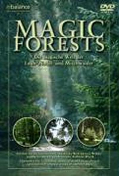 the-magic-forest