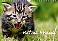 9783665615987 - Heiko Lehmann: Katzen & Hunde (Wandkalender 2018 DIN A4 quer) - Katzen & Hunde in natürlichen Umfeld (Monatskalender, 14 Seiten ) - كتاب