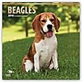 Beagles 2018 - 18-Monatskalender