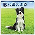 Border Collies 2018 - 18-Monatskalender