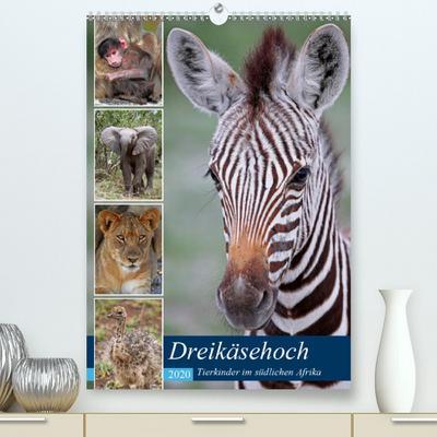 Calvendo Premium Kalender Dreikäsehoch - Tierkinder im südlichen Afrika: Nachwuchs in den Nationalparks (hochwertiger DIN A2 Wandkalender 2020, Kunstdruck in Hochglanz)