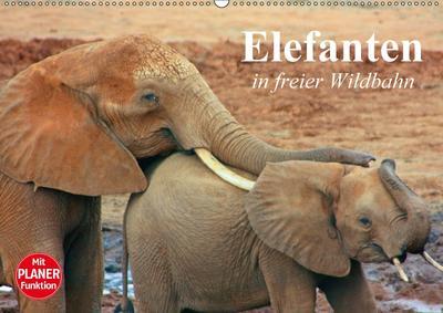 Elefanten in freier Wildbahn (Wandkalender 2017 DIN A2 quer)