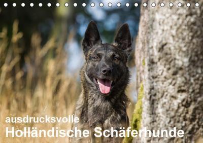 ausdrucksvolle-hollandische-schaferhunde-tischkalender-2016-din-a5-quer-beieindruckend-und-ausdru