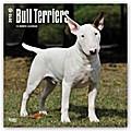 Bull Terrier 2018 - 18-Monatskalender