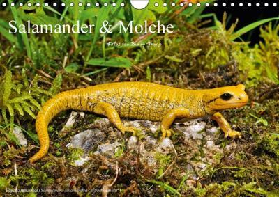 Salamander und Molche (Wandkalender 2018 DIN A4 quer)