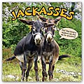 Jackasses and the things they say - Was Esel erzählen 2018 - 18-Monatskalender