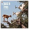 Goats in Trees - Ziegen auf Bäumen 2018 - 18-Monatskalender