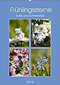 Frühlingssterne Scilla und Schneestolz (Wandkalender 2019 DIN A2 hoch)
