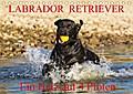 9783665915964 - N N: Labrador Retriever - ein Herz auf 4 Pfoten (Tischkalender 2018 DIN A5 quer) - Eine der beliebtesten Hunderassen in Porträt und Action auf 13 hinreißenden Kalenderblättern (Monatskalender, 14 Seiten ) - كتاب
