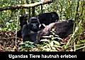 9783665915629 - Johanna Krause: Ugandas Tiere hautnah erleben (Wandkalender 2018 DIN A3 quer) - Ugandas vielfältige Tierwelt, der man in ihrer natürlichen Umgebung begegnen kann. (Monatskalender, 14 Seiten ) - كتاب