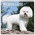 Bichon Frisé - Gelockter Bichon 2018 - 18-Monatskalender