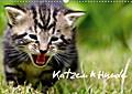 9783665615994 - Heiko Lehmann: Katzen & Hunde (Wandkalender 2018 DIN A3 quer) - Katzen & Hunde in natürlichen Umfeld (Monatskalender, 14 Seiten ) - کتاب
