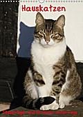9783665615666 - Antje Lindert-Rottke: Hauskatzen (Wandkalender 2018 DIN A3 hoch) - Stubentiger und Streuner unterwegs (Geburtstagskalender, 14 Seiten ) - کتاب