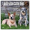 Australian Cattle Dogs 2018 - Australische Cattle Dogs - 18-Monatskalender