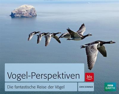 Vogel-Perspektiven: Die fantastische Reise der Vögel