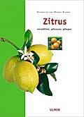 Zitrus: Auswählen, pflanzen, pflegen