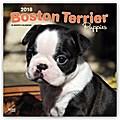 Boston Terrier Puppies - Boston Terrier Welpen 2018 - 18-Monatskalender