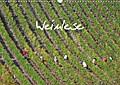 9783665615895 - Hans v. d. Lese: Weinlese (Wandkalender 2018 DIN A3 quer) - Ein Monatskalender mit Fotos der Weinlese von einem, der es wissen muss. Der Autor Hans v.d. Lese hat über 60.000 kg Trauben in 14 Jahren in Deutschland, Frankreich und der Schweiz geschnitten. (Monatskalender,  - کتاب