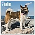 Akitas 2018 - 18-Monatskalender