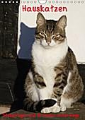 9783665615659 - Antje Lindert-Rottke: Hauskatzen (Wandkalender 2018 DIN A4 hoch) - Stubentiger und Streuner unterwegs (Geburtstagskalender, 14 Seiten ) - كتاب