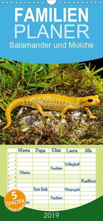 Salamander und Molche - Familienplaner hoch (Wandkalender 2019 , 21 cm x 45 cm, hoch)