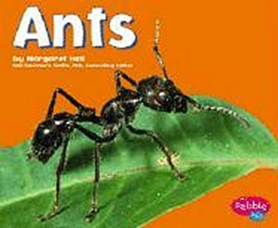 ants-pebble-plus-bugs-bugs-bugs-