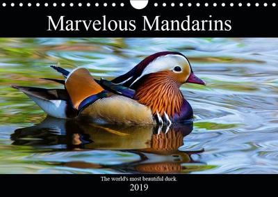 Marvellous Mandarins (Wall Calendar 2019 DIN A4 Landscape)