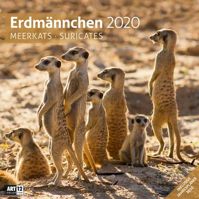 Erdmännchen 2020 Broschürenkalender