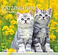 KatzenGlück 2018
