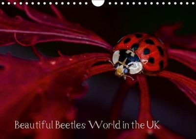 Beautiful Beetles World in the UK (Wall Calendar 2019 DIN A4 Landscape)
