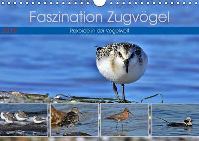 Faszination Zugvögel - Rekorde in der Vogelwelt (Wandkalender 2019 DIN A4 quer)