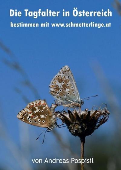 Die Tagfalter Österreichs bestimmen