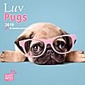 Luv Pugs - Möpse 2019 - 18-Monatskalender